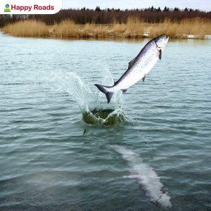 Рыбалка на семгу в Архангельской области!